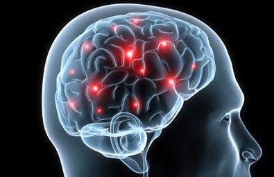 cerveau plastique