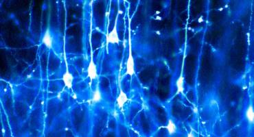 neurone_reseau